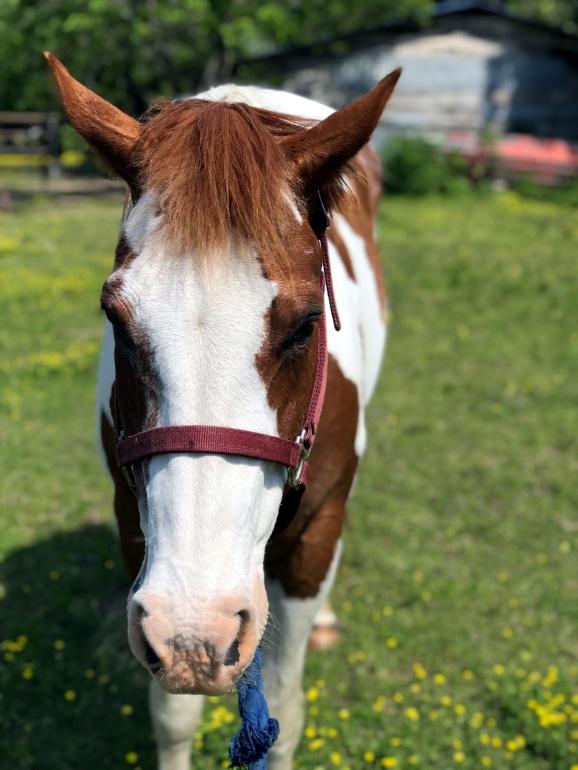 My horse, Daisy.