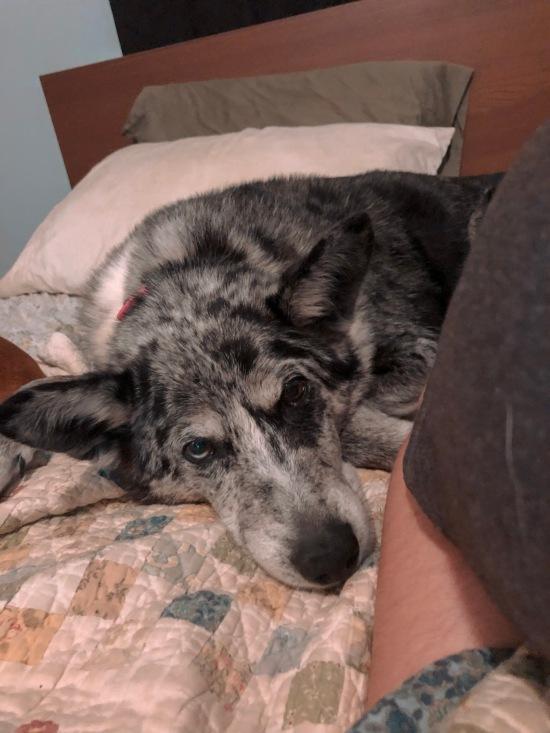 Freddie, my big mutt, is my snuggly companion.